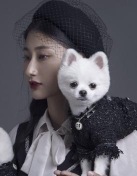 宠物摄影2020